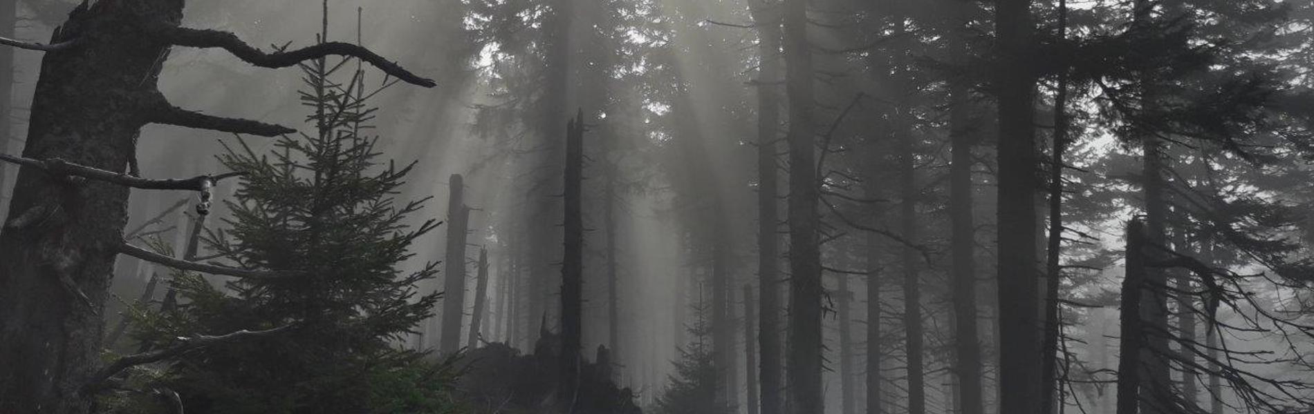Rušení lesních správ