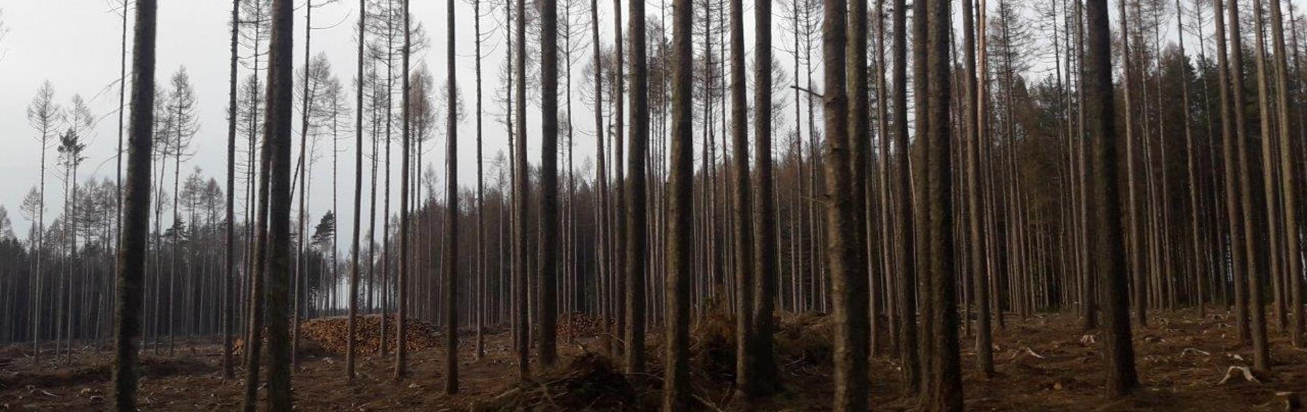 o lesích rozhodují politici, ne odborníci