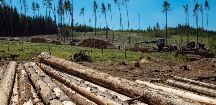 HN – Lesy ČR šetří aruší správy iředitelství. Podle lesníků to oslabí boj skůrovcem