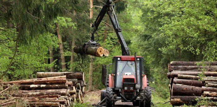 Deník N – Státní lesy na severní Moravě povede bývalý šéf slovenského podniku, jehož smlouvy prošetřovala policie